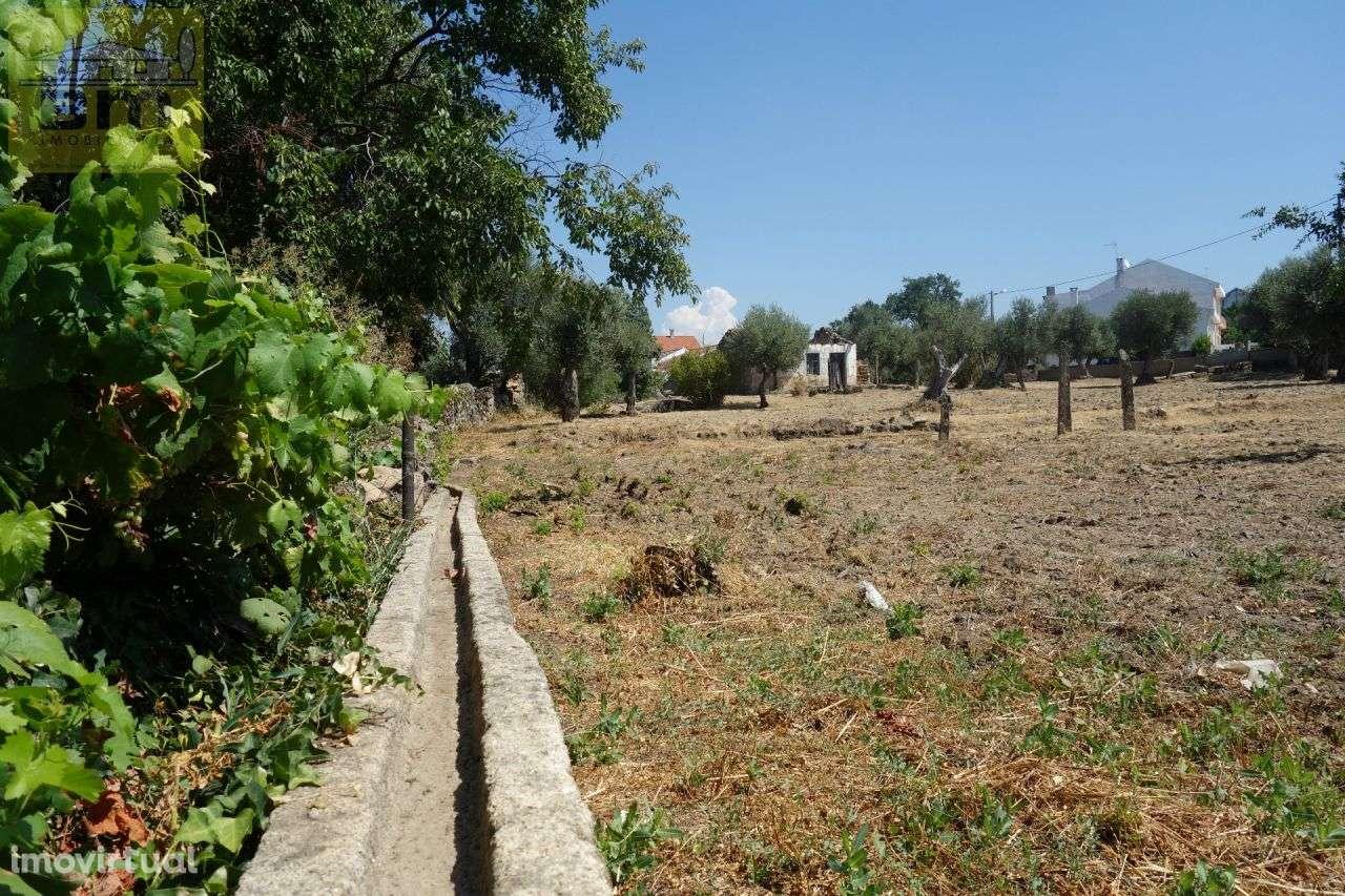 Quintas e herdades para comprar, Escalos de Cima e Lousa, Castelo Branco - Foto 4