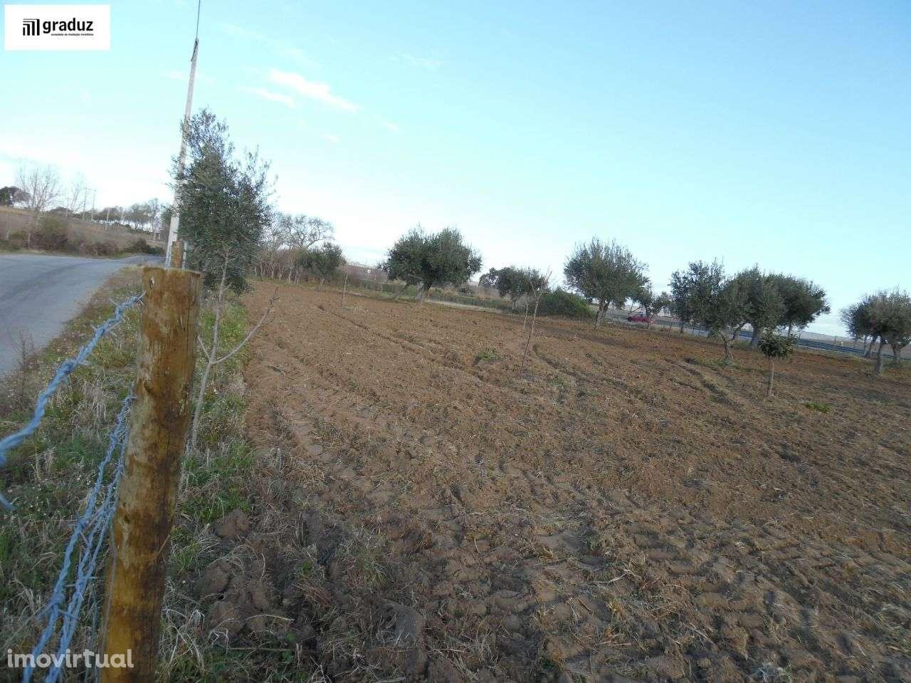Terreno para comprar, Idanha-a-Nova e Alcafozes, Castelo Branco - Foto 7