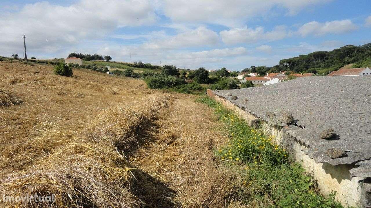 Quintas e herdades para comprar, Arruda dos Vinhos - Foto 12