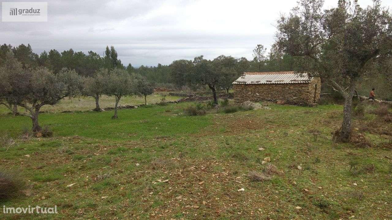Quintas e herdades para comprar, Benquerenças, Castelo Branco - Foto 2