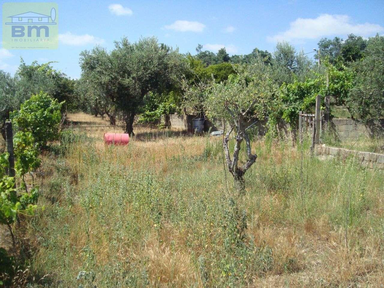 Quintas e herdades para comprar, Almaceda, Castelo Branco - Foto 30