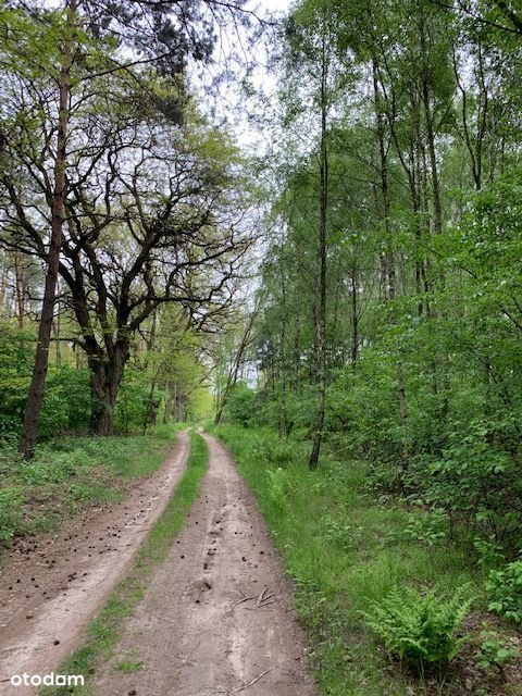 Urokliwa Działka w lesie z warunkami zabudowy