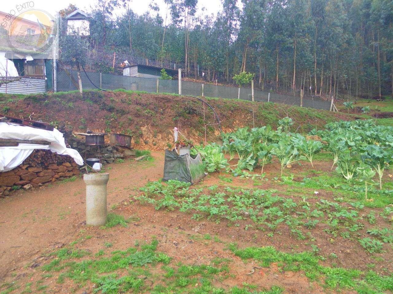 Terreno para comprar, Canedo, Vale e Vila Maior, Santa Maria da Feira, Aveiro - Foto 3