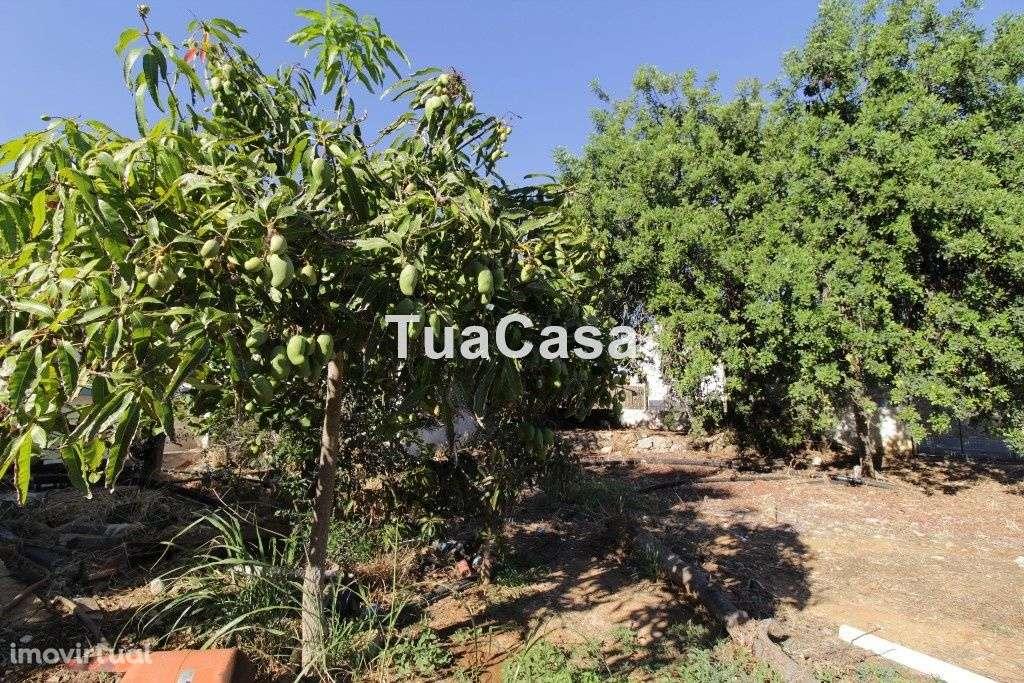 Quintas e herdades para comprar, Moncarapacho e Fuseta, Olhão, Faro - Foto 30