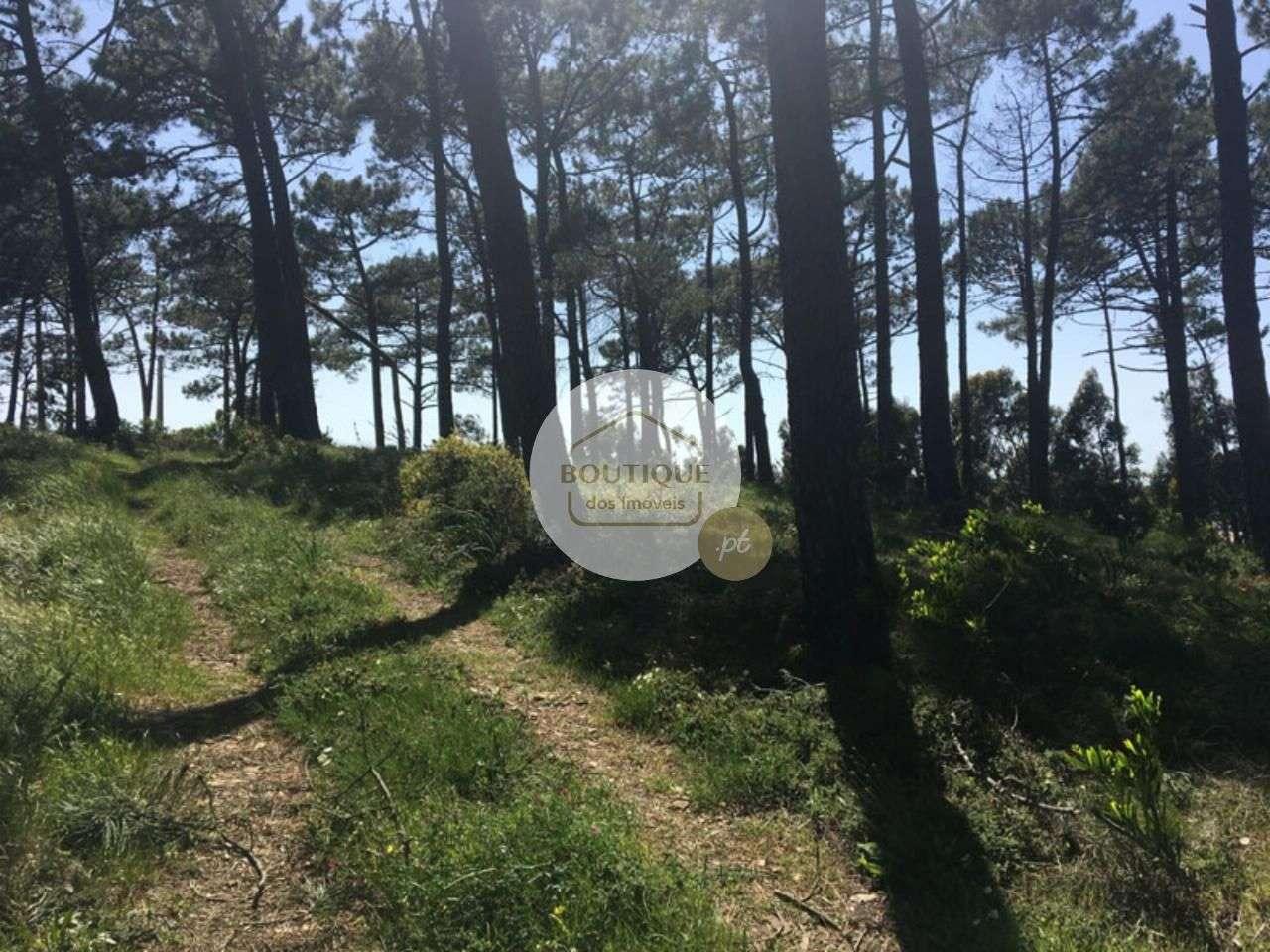 Terreno para comprar, Alcabideche, Cascais, Lisboa - Foto 12
