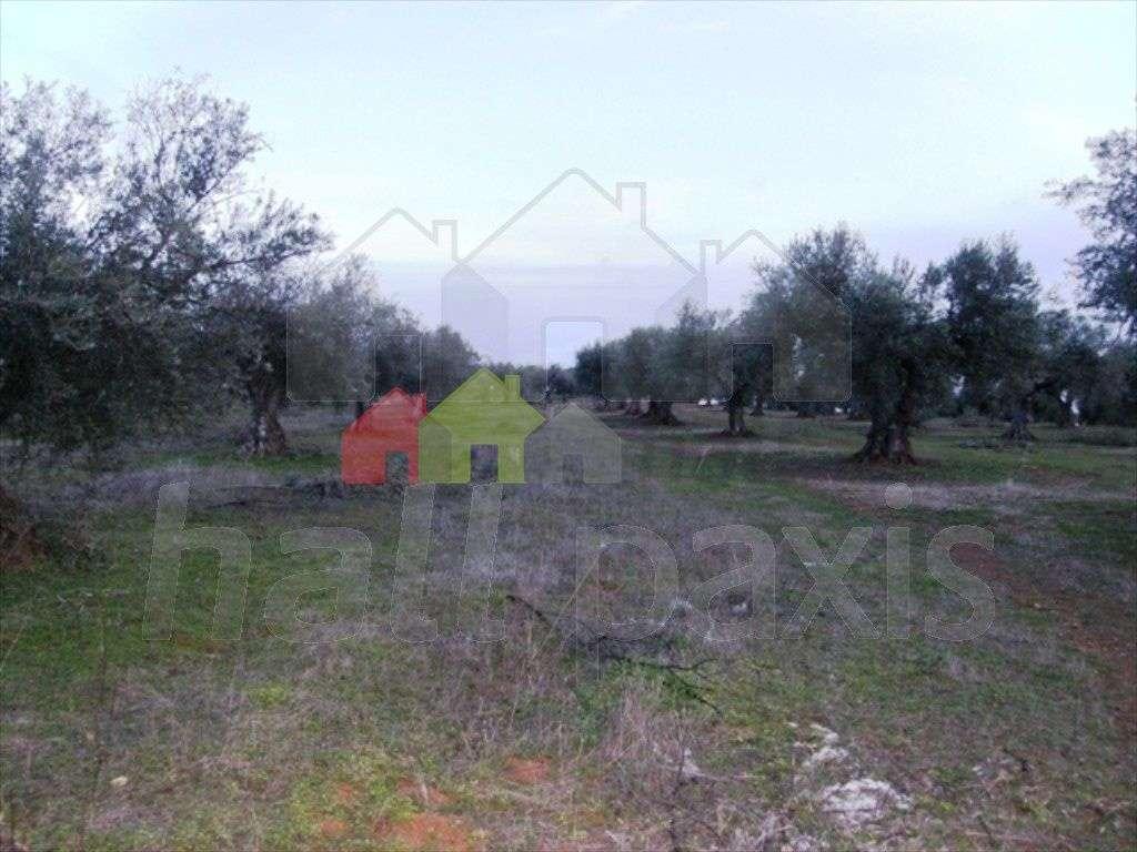 Terreno para comprar, Vila Nova de São Bento e Vale de Vargo, Serpa, Beja - Foto 4