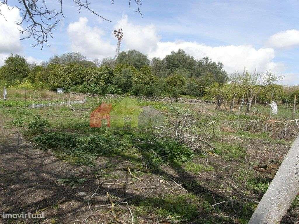 Terreno para comprar, Santa Vitória e Mombeja, Beja - Foto 12
