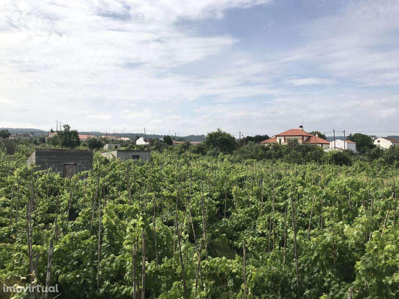 Terreno para comprar, São Miguel do Rio Torto e Rossio Ao Sul do Tejo, Santarém - Foto 4