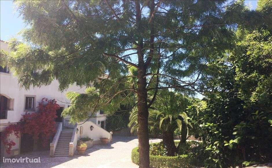 Quintas e herdades para comprar, Colares, Sintra, Lisboa - Foto 14