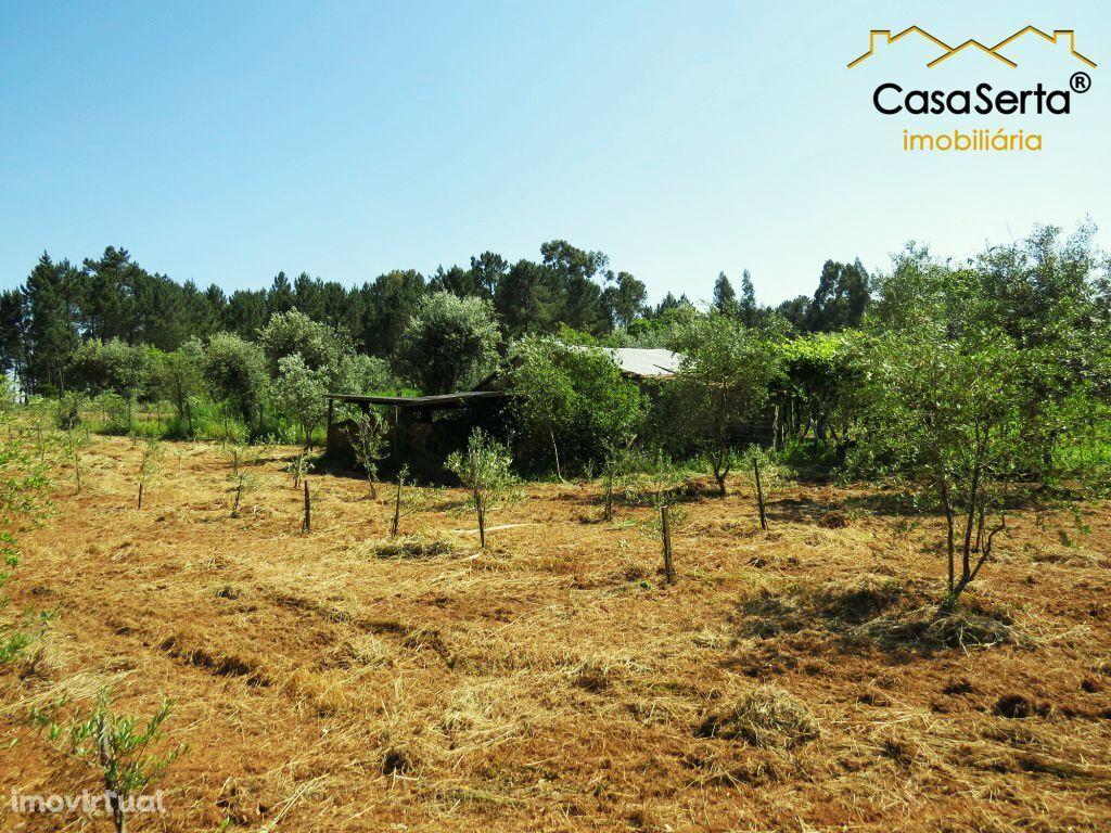 Terreno para comprar, Cabeçudo, Sertã, Castelo Branco - Foto 6