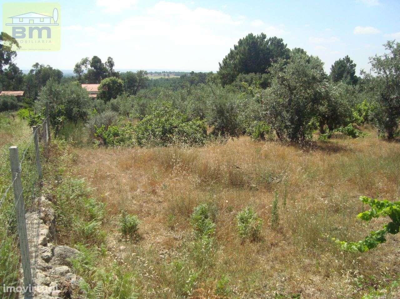 Quintas e herdades para comprar, Almaceda, Castelo Branco - Foto 44
