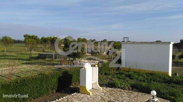 Quintas e herdades para comprar, Branca, Santarém - Foto 8