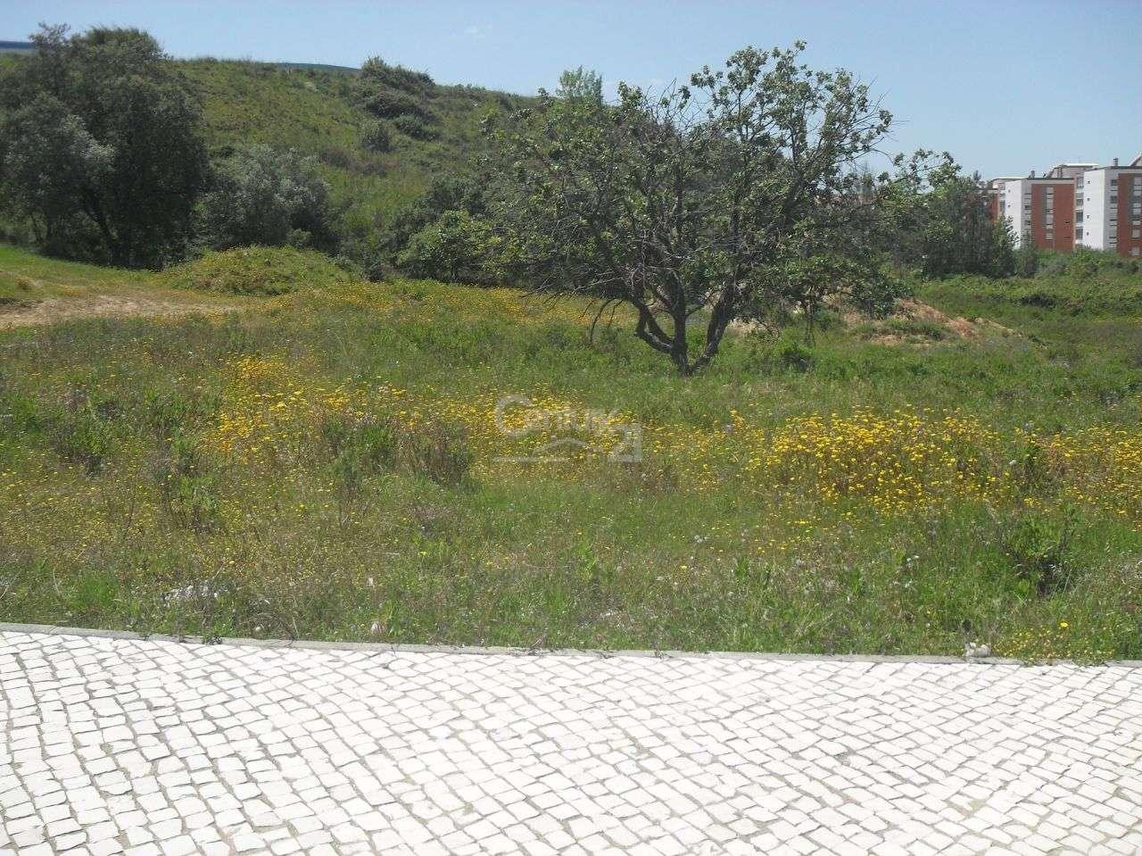 Terreno para comprar, Santarém (Marvila), Santa Iria da Ribeira de Santarém, Santarém (São Salvador) e Santarém (São Nicolau), Santarém - Foto 1