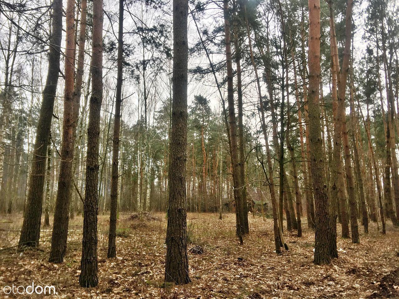 Działka leśna budowlana pod Warszawą PL