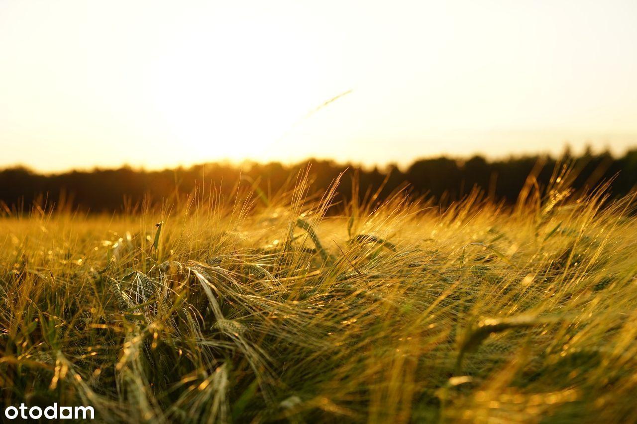 Sprzedam działkę rolną 3,83 ha, 2 km od morza