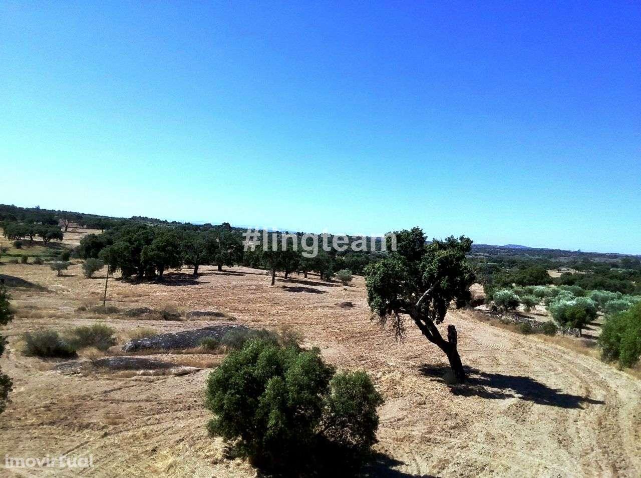Quintas e herdades para comprar, Alcains, Castelo Branco - Foto 1
