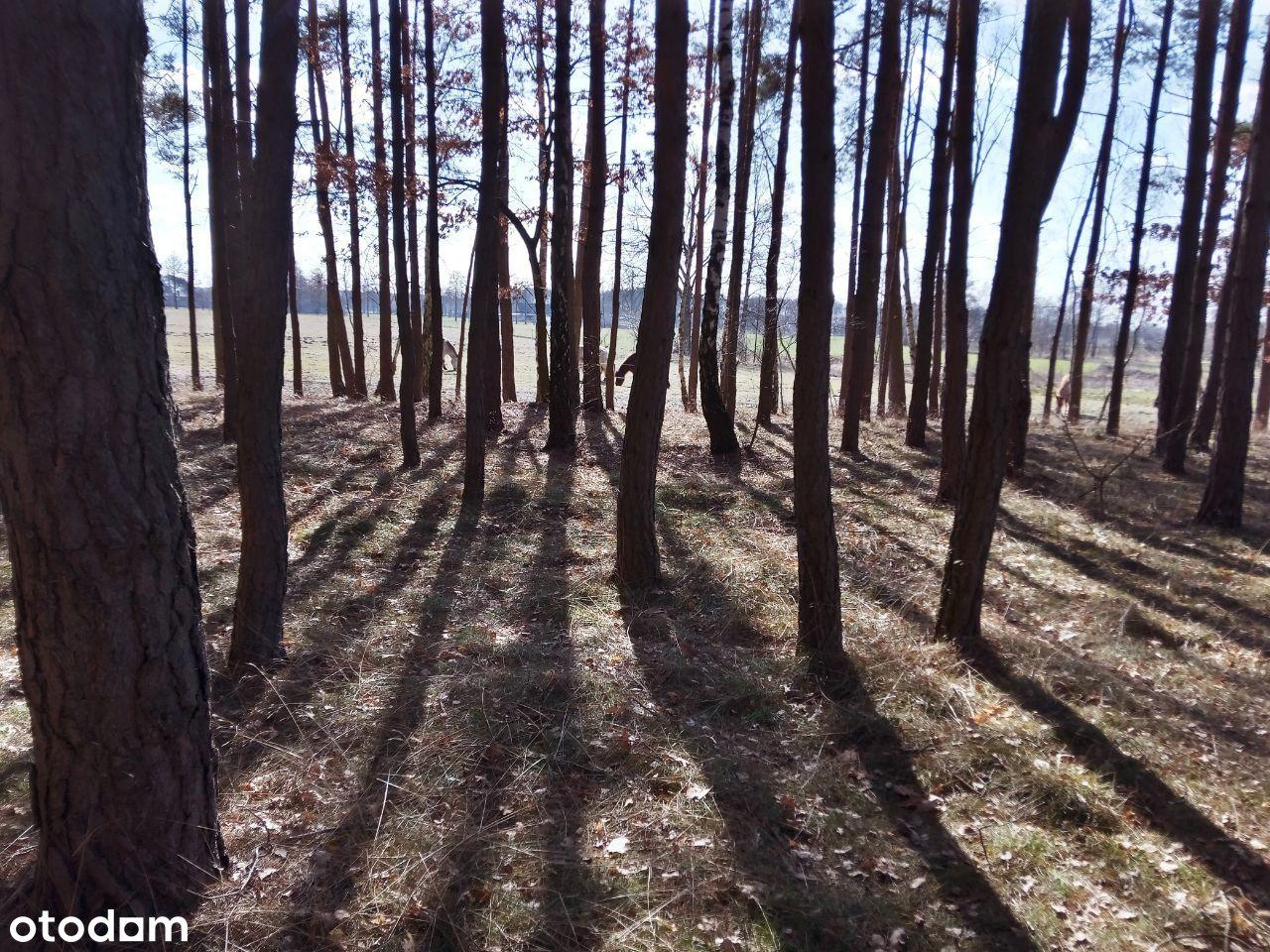 Działka rekreacyjna leśna Wola Jabłońska