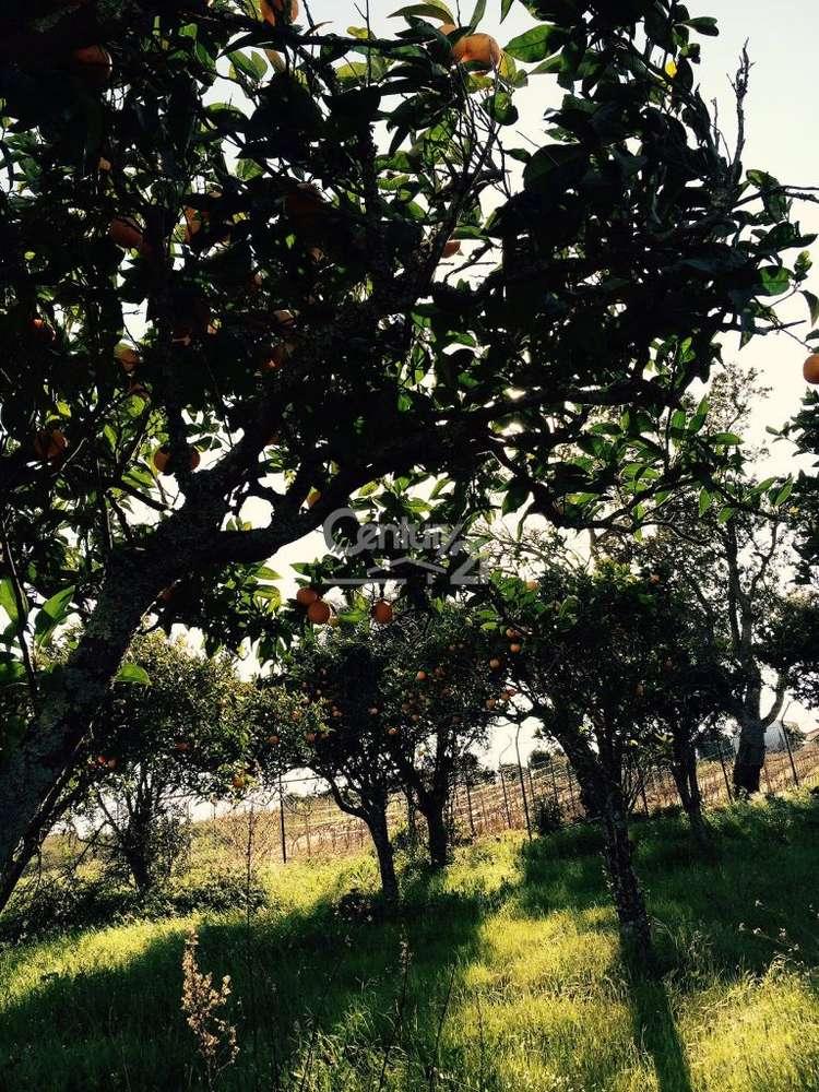 Quintas e herdades para comprar, Ereira e Lapa, Cartaxo, Santarém - Foto 4