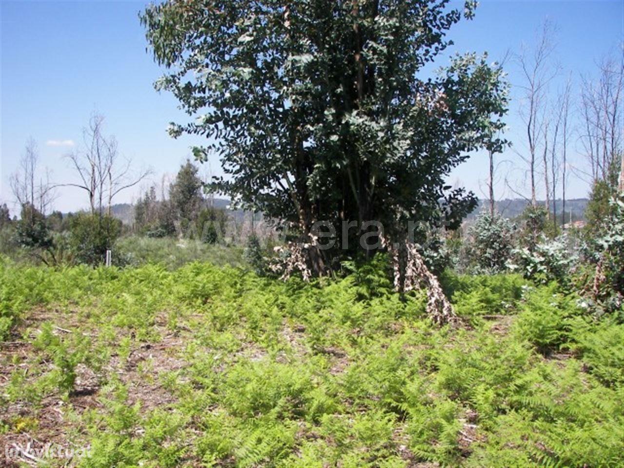 Terreno para plantações com 450 m2 em Medelo