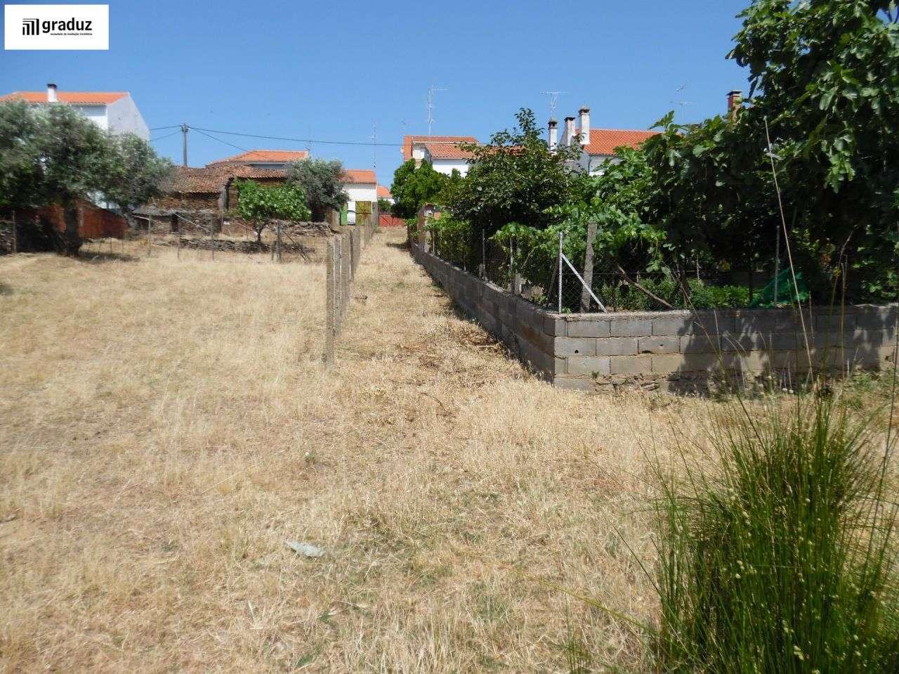 Terreno para comprar, Escalos de Baixo e Mata, Castelo Branco - Foto 4