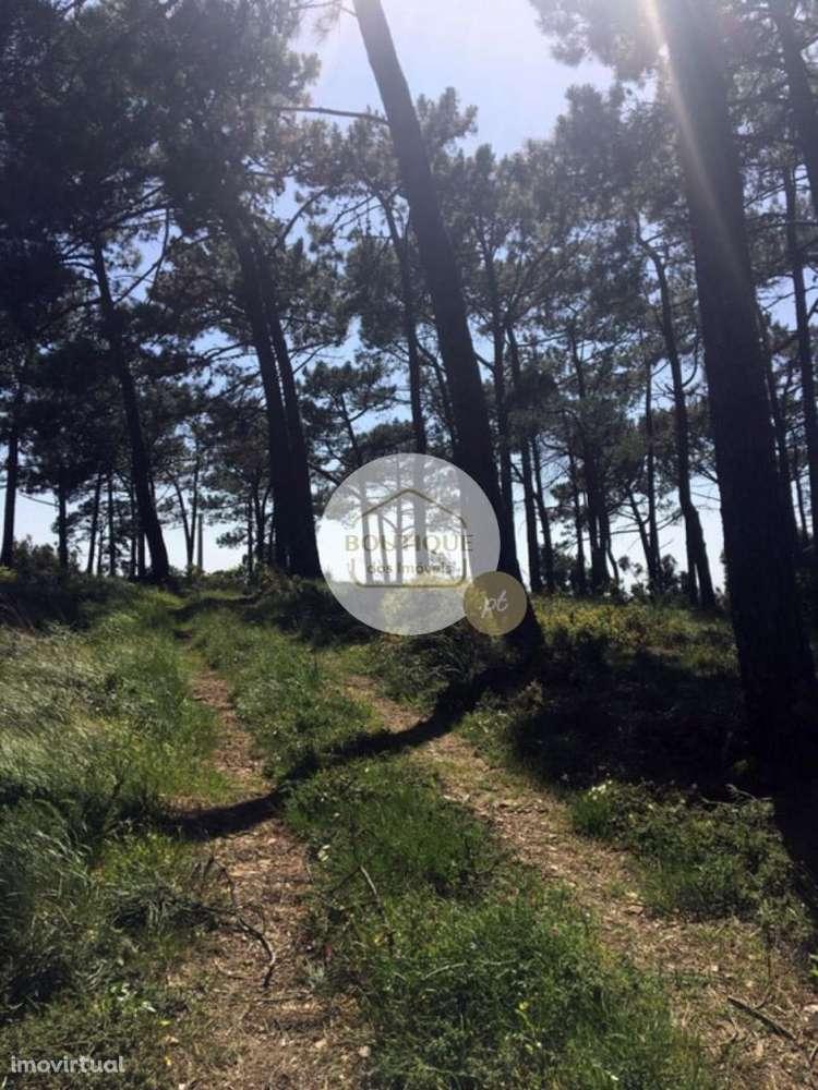 Terreno para comprar, Alcabideche, Cascais, Lisboa - Foto 11