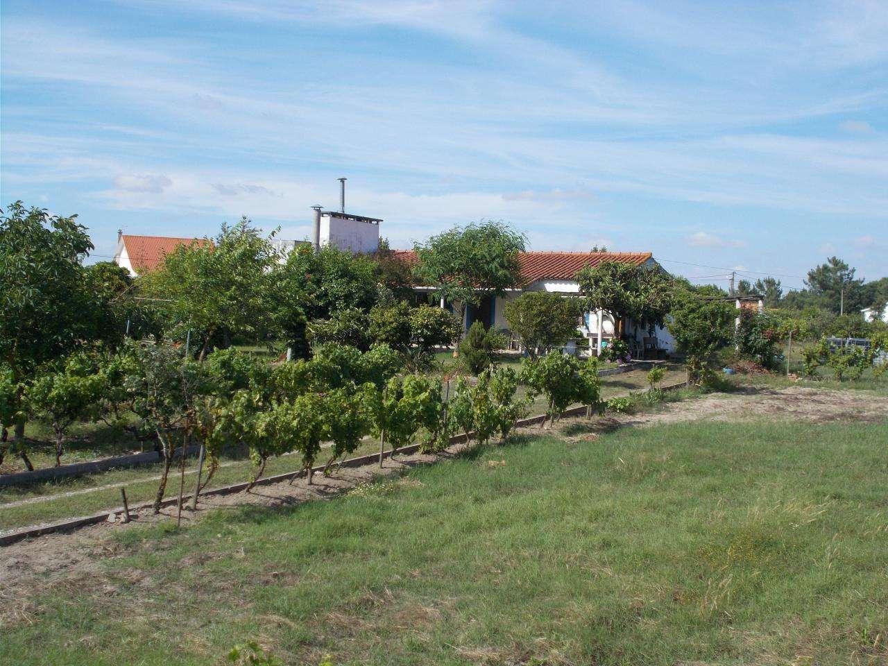Quintas e herdades para comprar, Vale de Santarém, Santarém - Foto 2