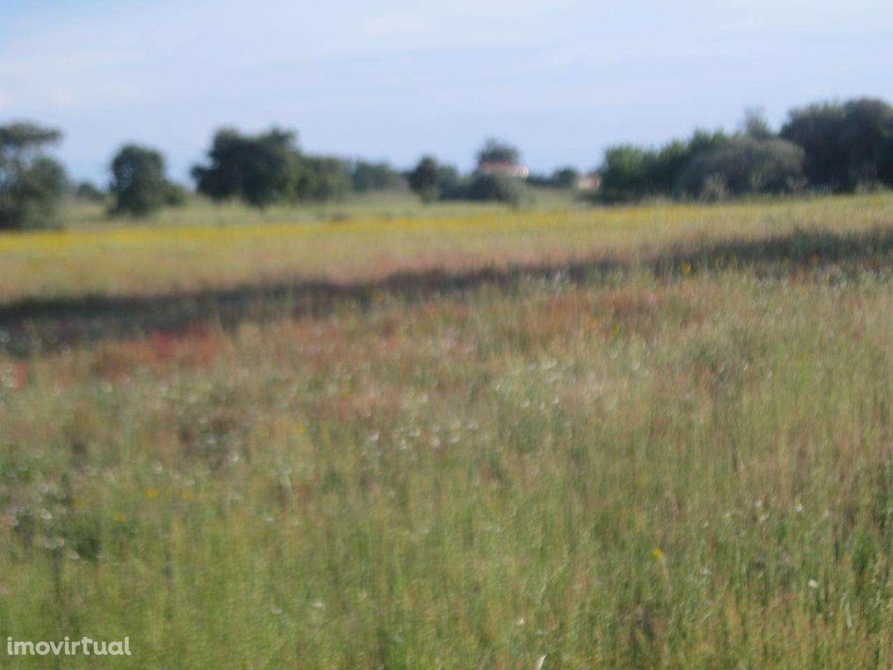 Terreno para comprar, Orca, Castelo Branco - Foto 12