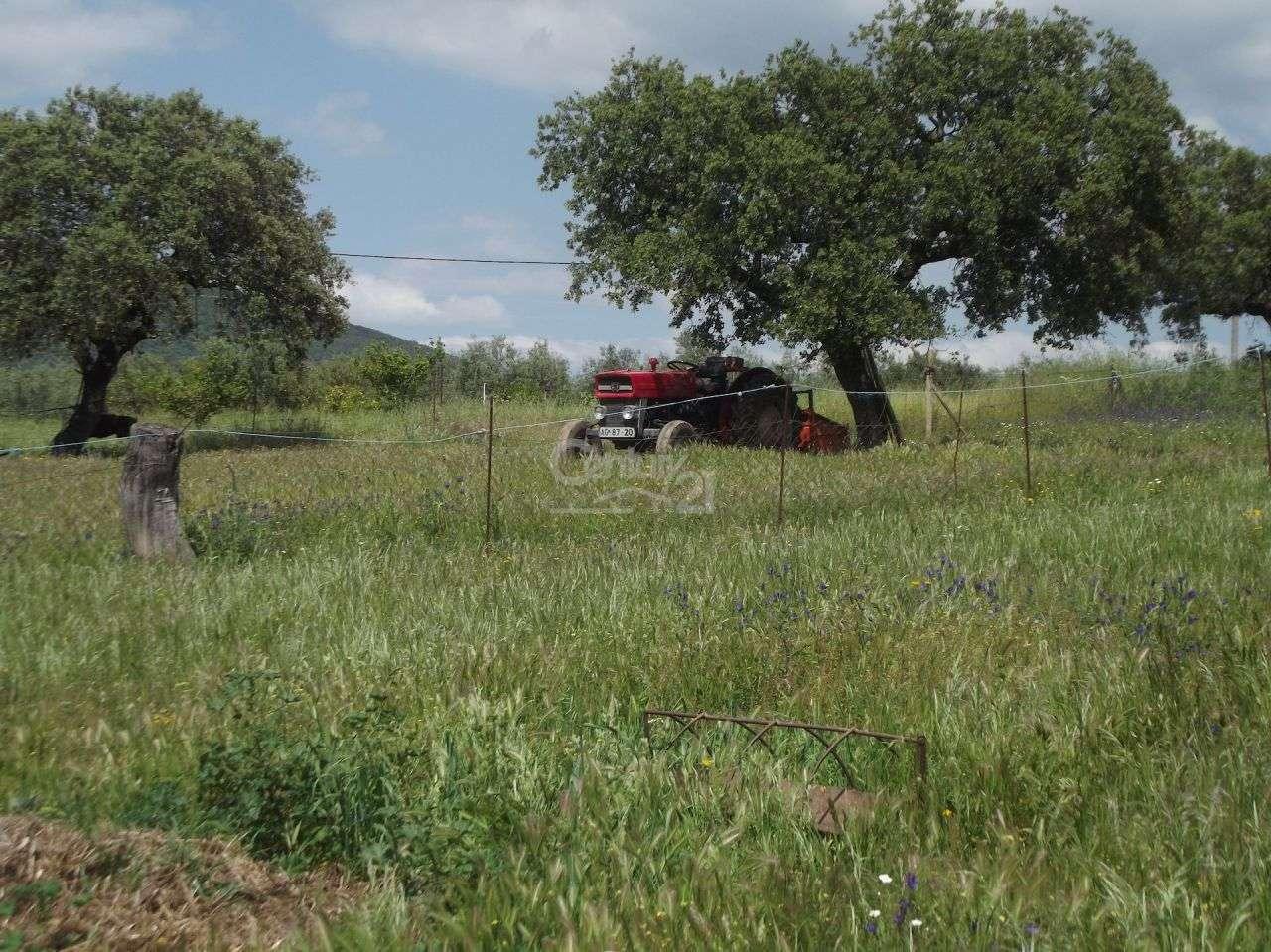 Quintas e herdades para comprar, Vila Nova de São Bento e Vale de Vargo, Serpa, Beja - Foto 4