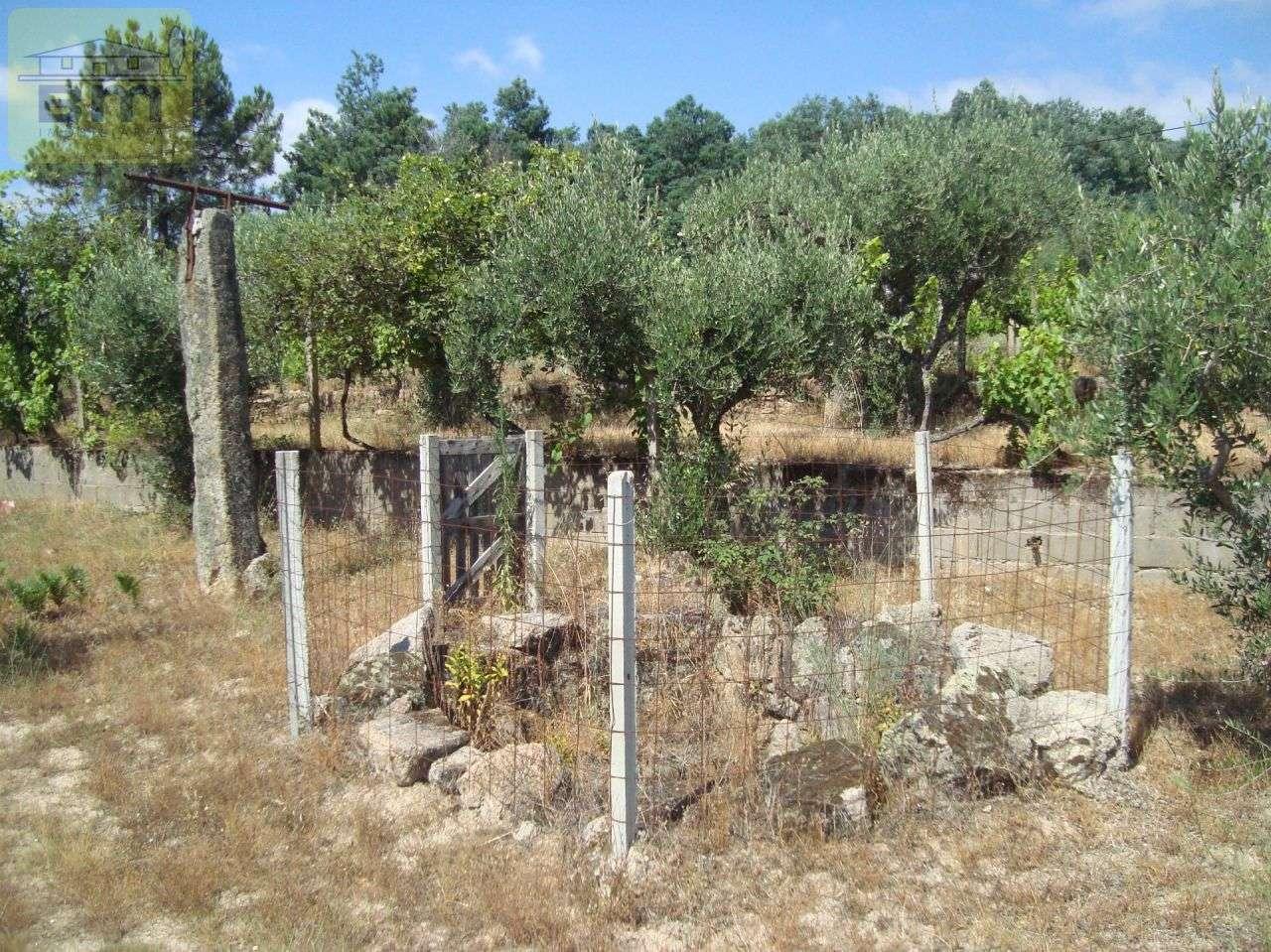 Quintas e herdades para comprar, Almaceda, Castelo Branco - Foto 37