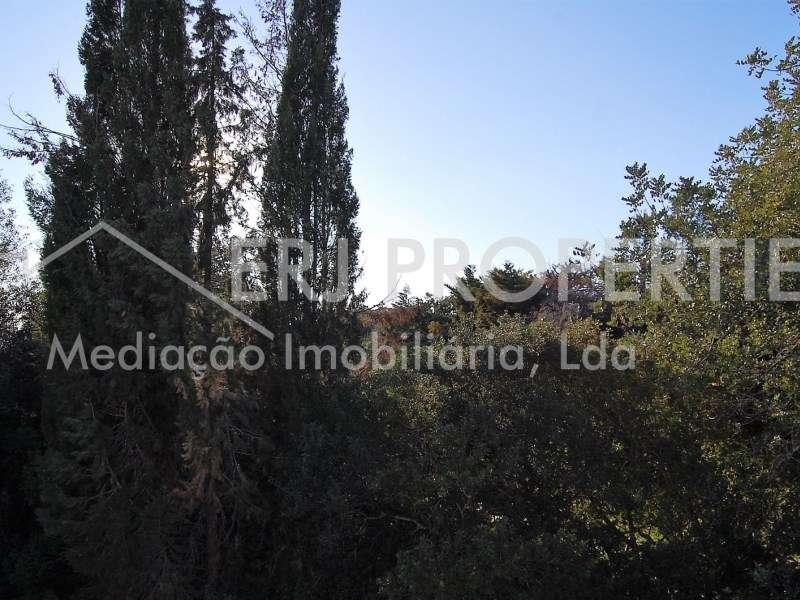 Quintas e herdades para comprar, Luz de Tavira e Santo Estêvão, Faro - Foto 12