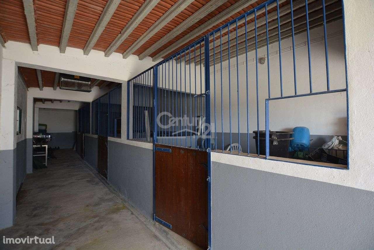 Quintas e herdades para comprar, Branca, Coruche, Santarém - Foto 49