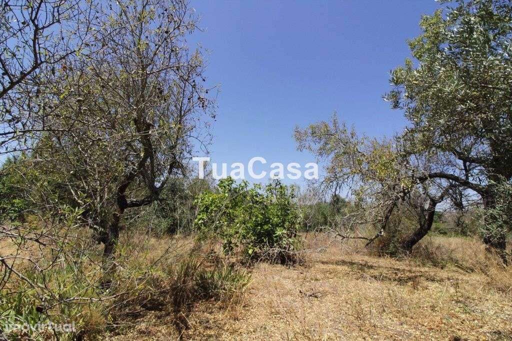 Quintas e herdades para comprar, Luz de Tavira e Santo Estêvão, Tavira, Faro - Foto 9