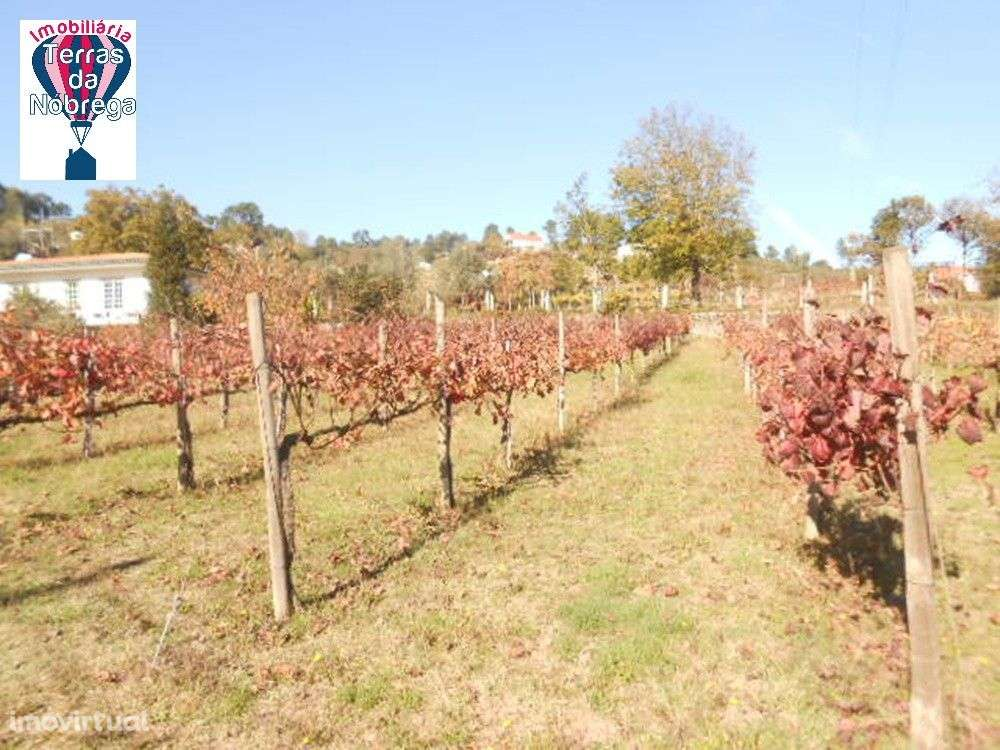 Quintas e herdades para comprar, Crasto, Ruivos e Grovelas, Viana do Castelo - Foto 9