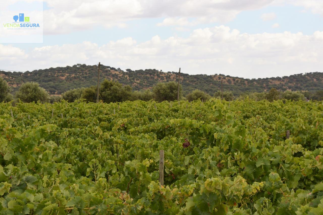 Vende-se terreno agrícola com vinha | Vila de Frades