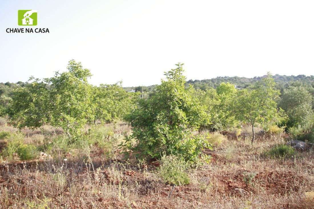 Terreno para comprar, Moncarapacho e Fuseta, Faro - Foto 11