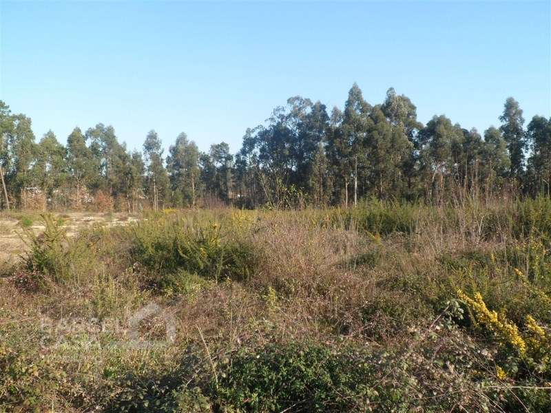 Terreno para comprar, Oliveira, Braga - Foto 3