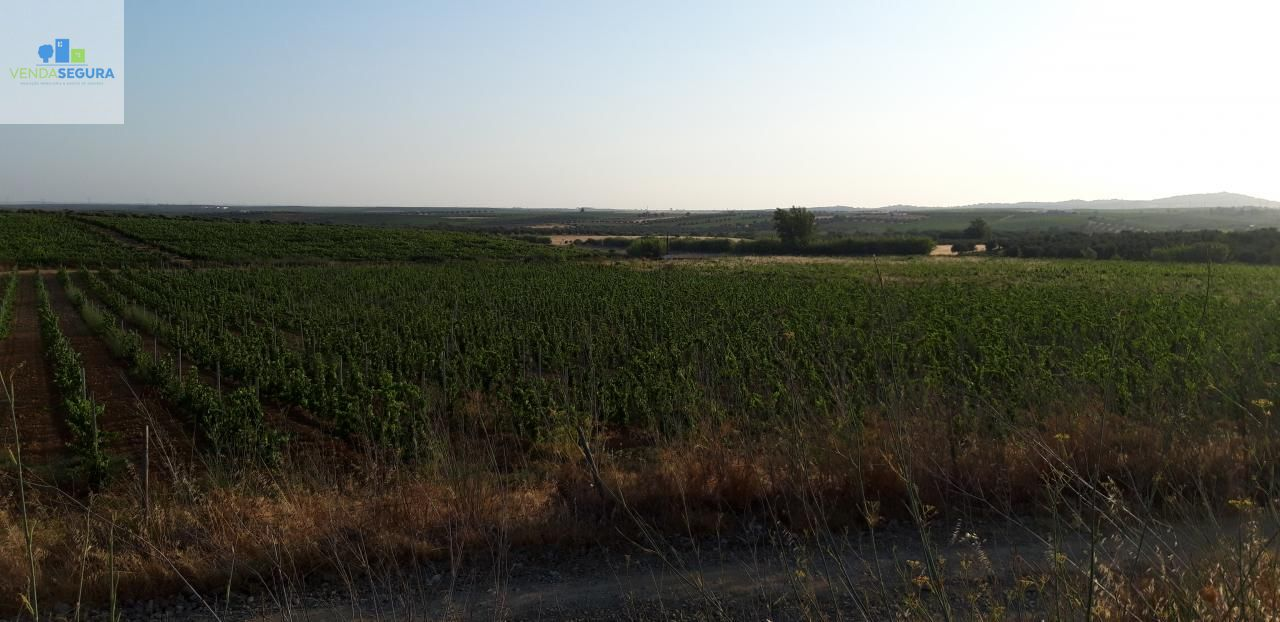 Terreno agrícola com vinha e olival | Selmes