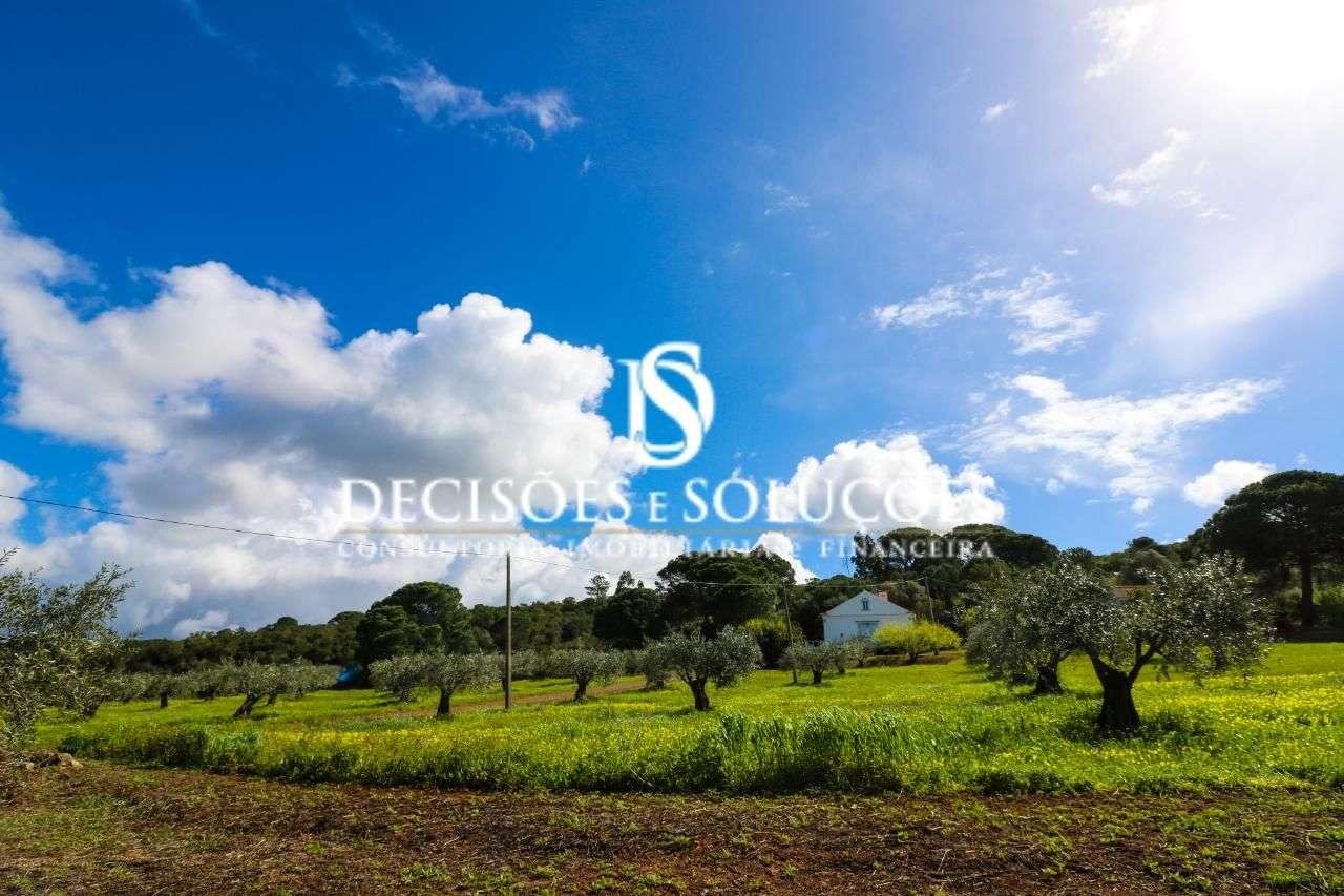Quintas e herdades para comprar, Santiago do Cacém, Santa Cruz e São Bartolomeu da Serra, Santiago do Cacém, Setúbal - Foto 16