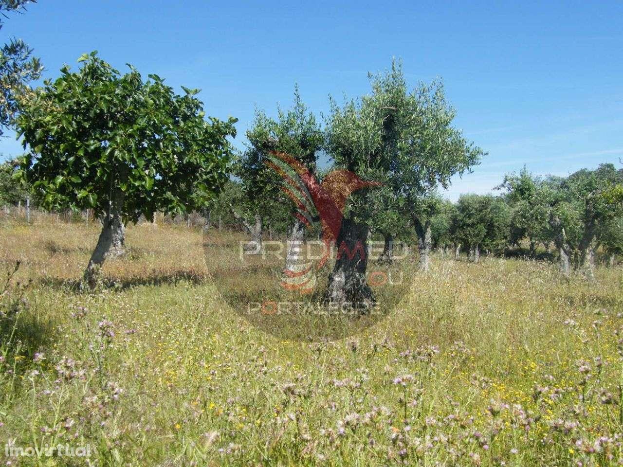 Quintas e herdades para comprar, Urra, Portalegre - Foto 6