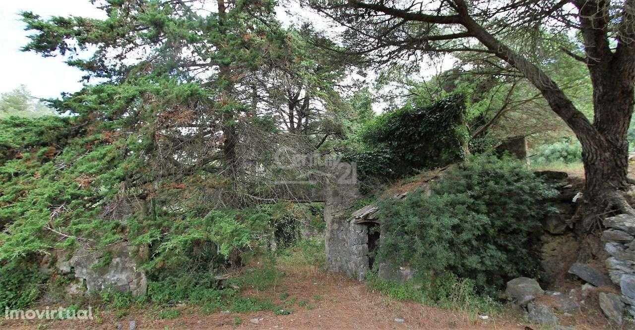 Quintas e herdades para comprar, Alcabideche, Cascais, Lisboa - Foto 21