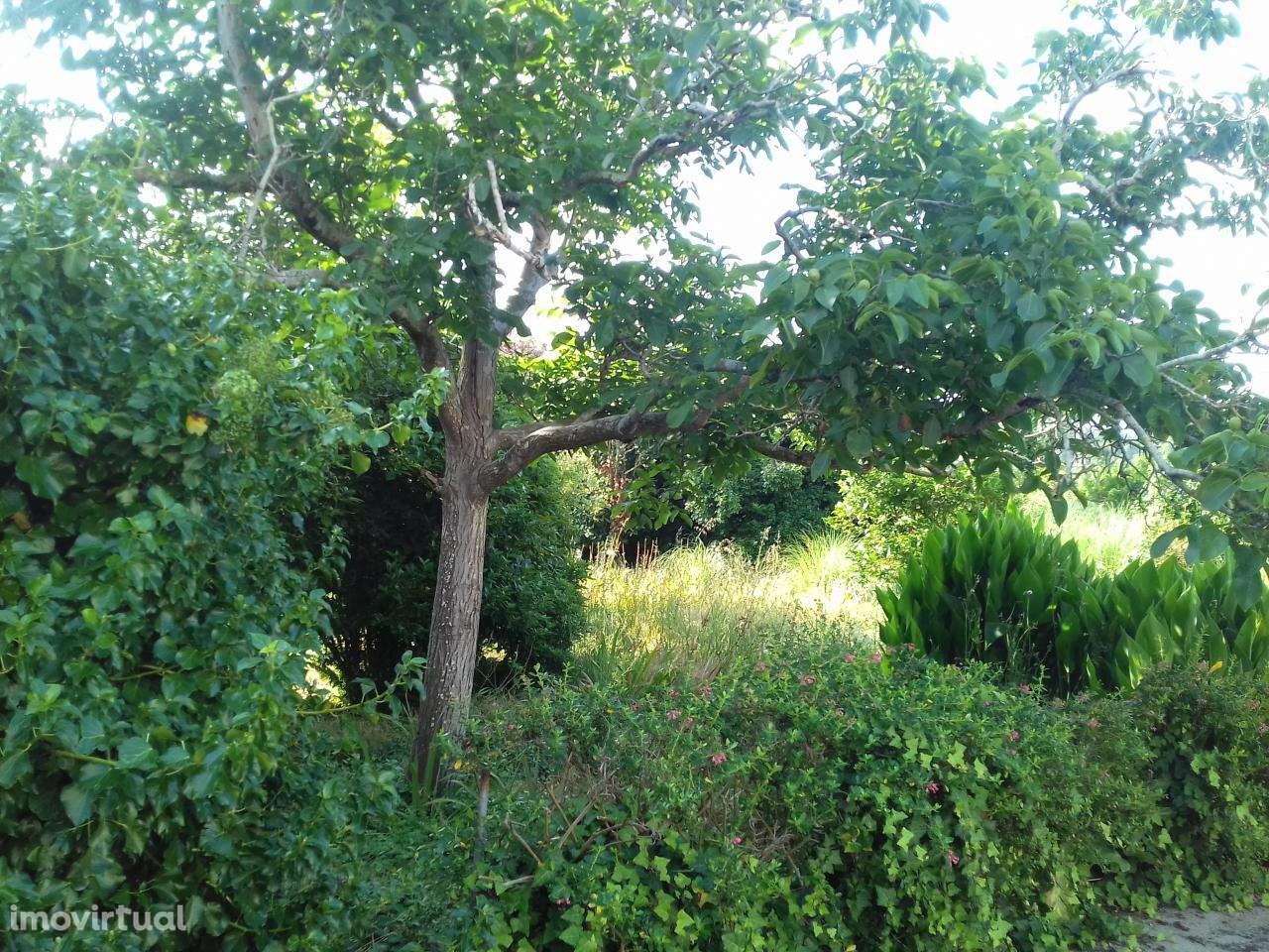 Quintas e herdades para comprar, Canidelo, Porto - Foto 15