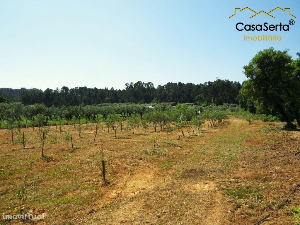 Terreno para comprar, Cabeçudo, Sertã, Castelo Branco - Foto 4