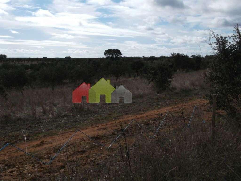 Quintas e herdades para comprar, Albernoa e Trindade, Beja - Foto 10