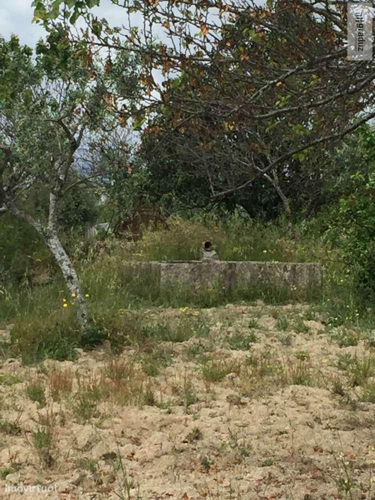 Quintas e herdades para comprar, Lardosa, Castelo Branco - Foto 4