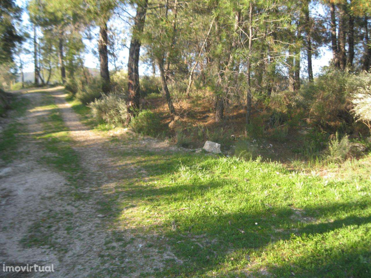Terreno para comprar, Vale de Prazeres e Mata da Rainha, Castelo Branco - Foto 12