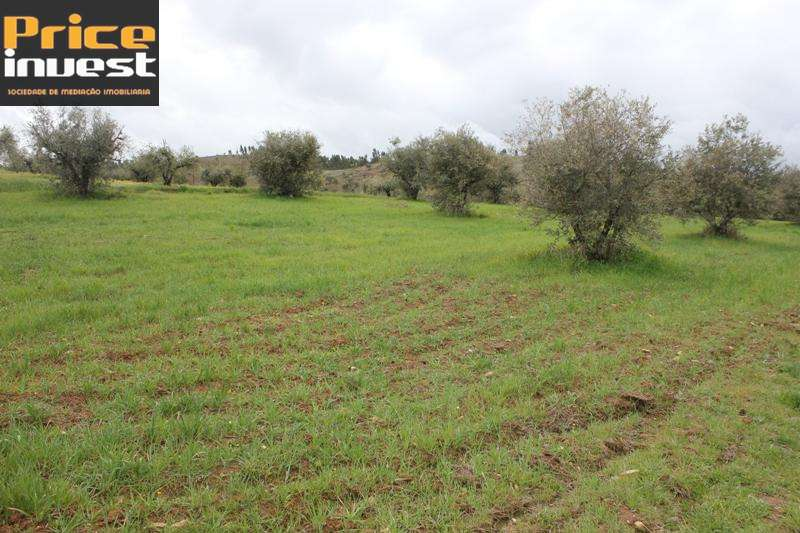 Terreno para comprar, Amieira e Alqueva, Évora - Foto 6