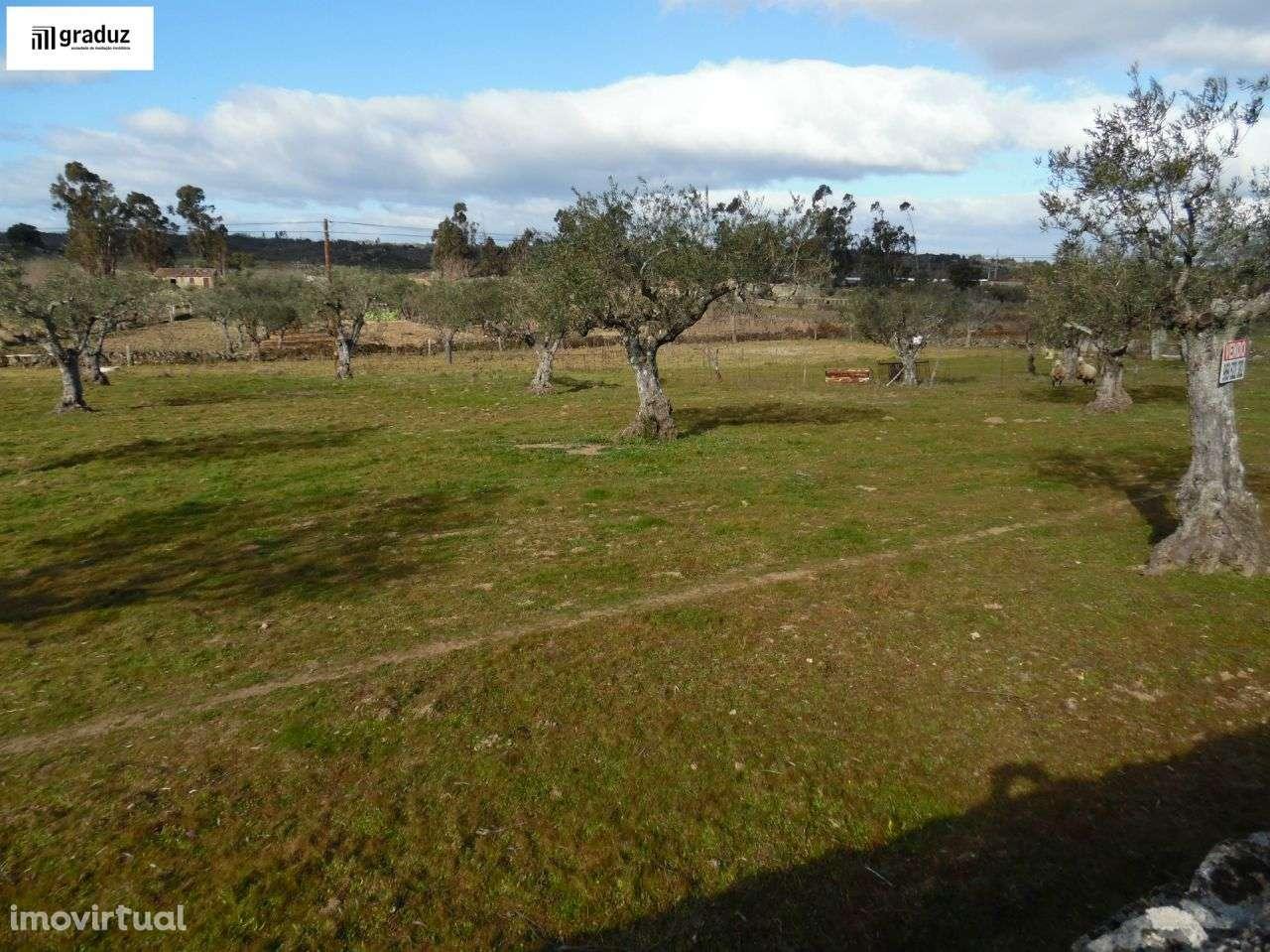 Terreno para comprar, Alcains, Castelo Branco - Foto 3