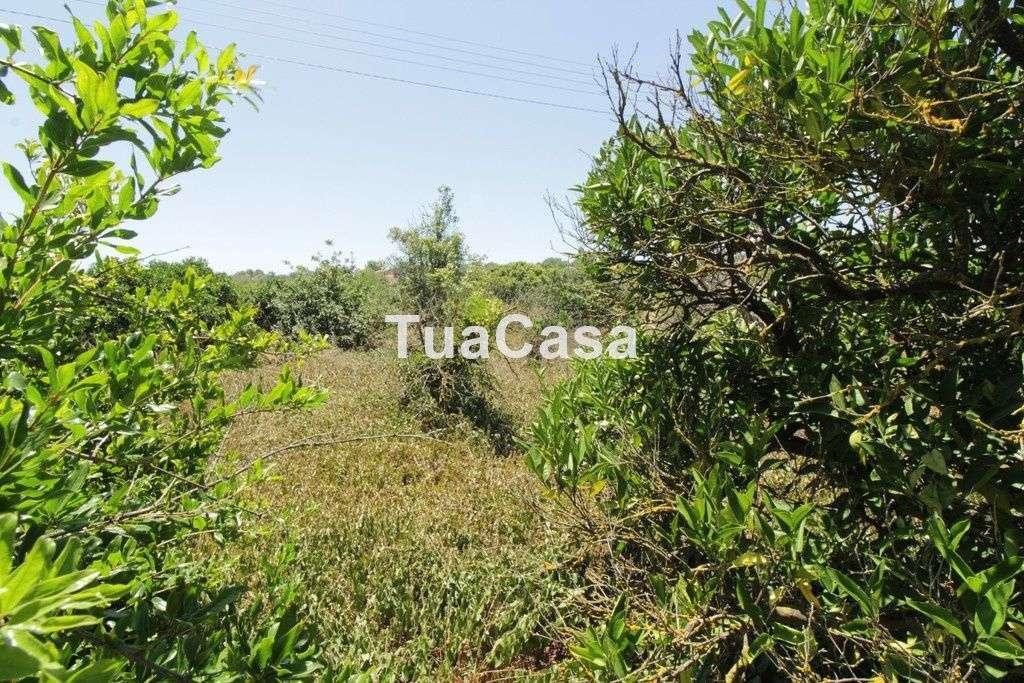 Quintas e herdades para comprar, Luz de Tavira e Santo Estêvão, Tavira, Faro - Foto 11
