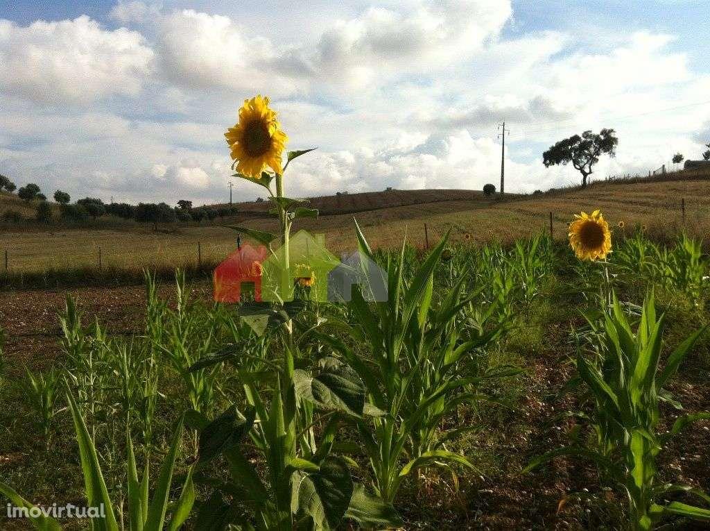 Quintas e herdades para comprar, Aljustrel e Rio de Moinhos, Aljustrel, Beja - Foto 26