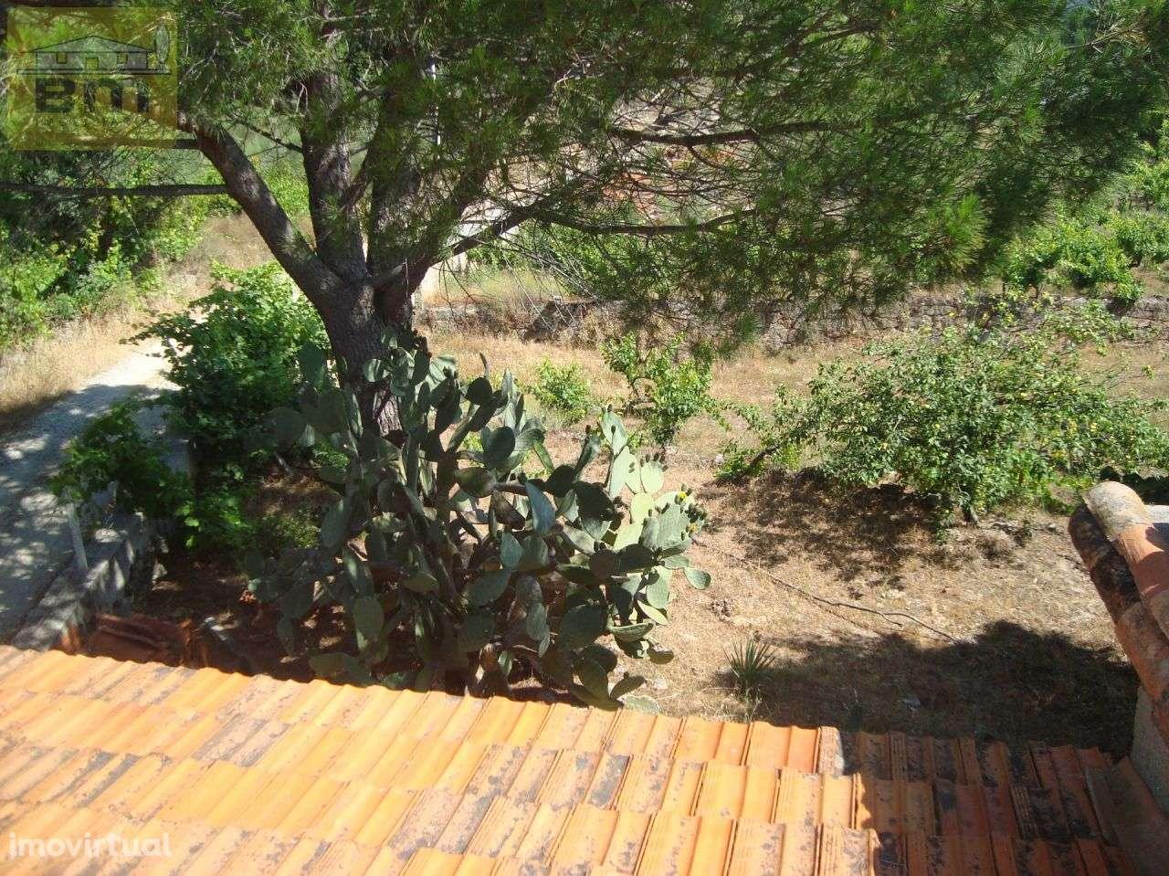 Quintas e herdades para comprar, Almaceda, Castelo Branco - Foto 9